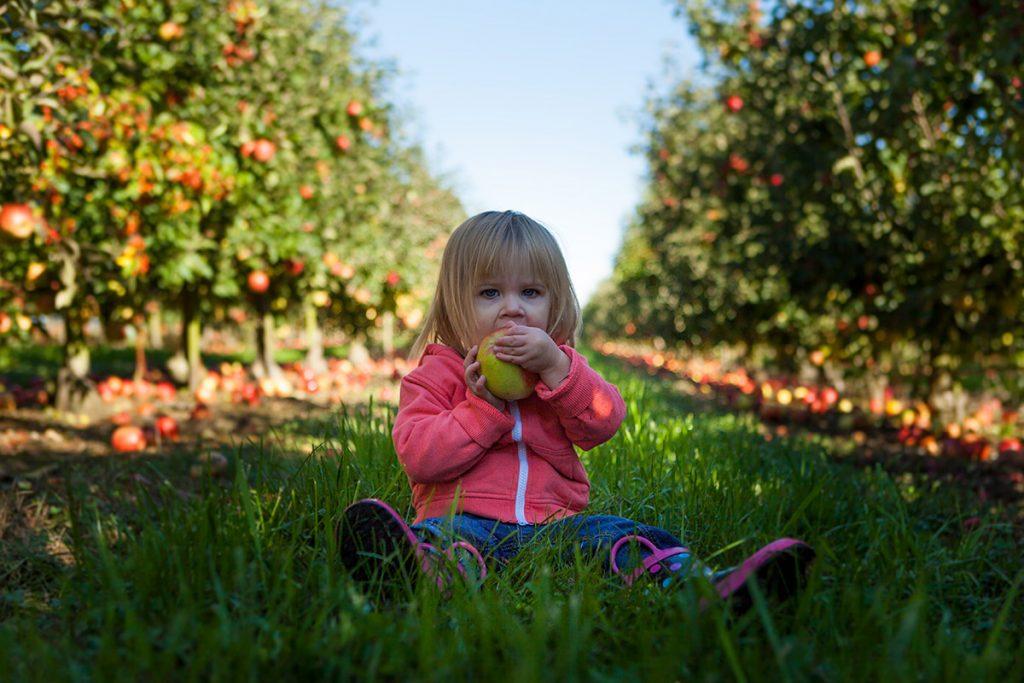 Fresh apple eating !!