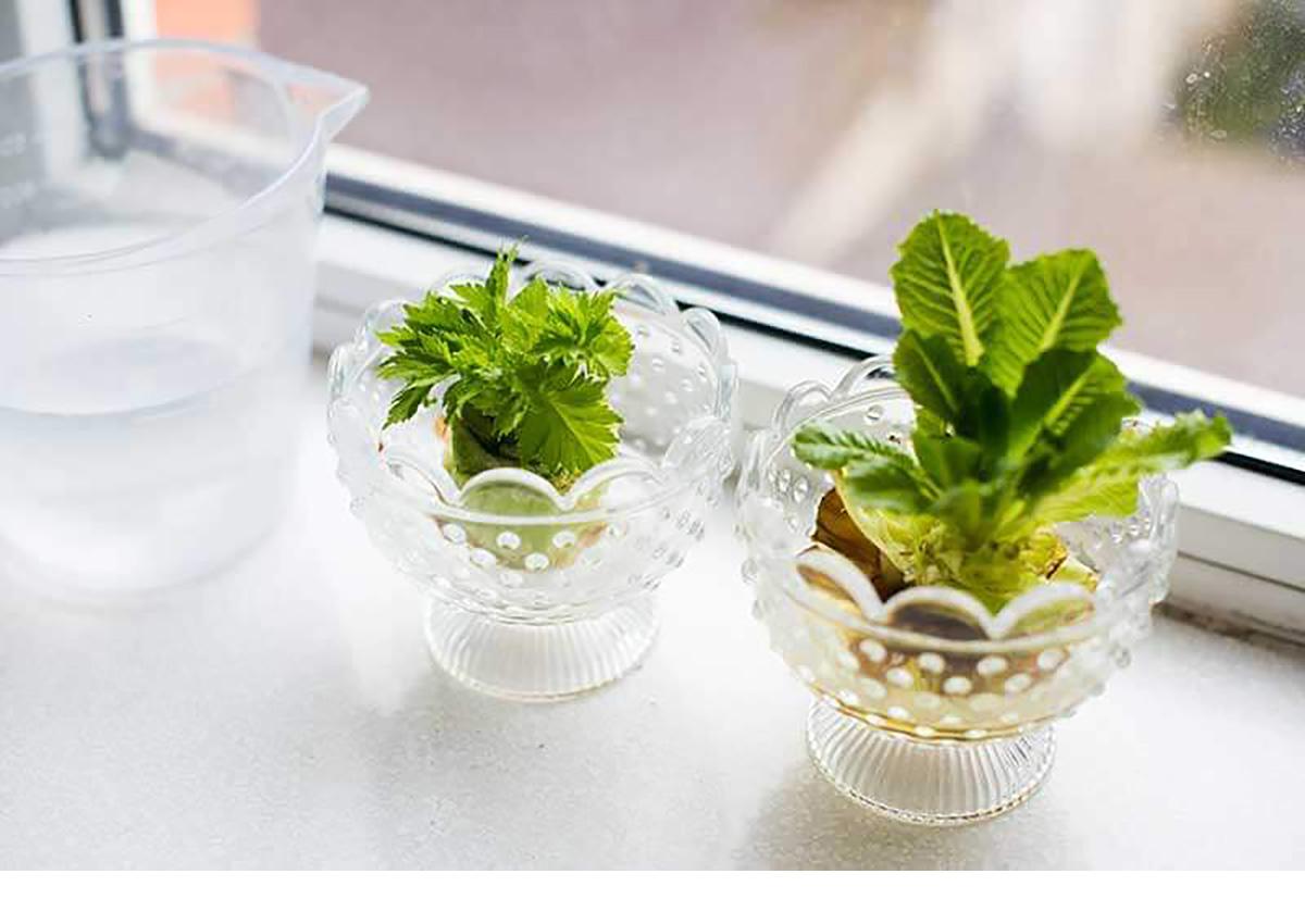 celery and lettuce